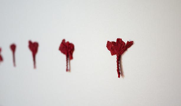 Flors de St Joan: roig